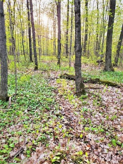 0 305th Avenue, Frederic, WI 54837 - Frederic, WI real estate listing