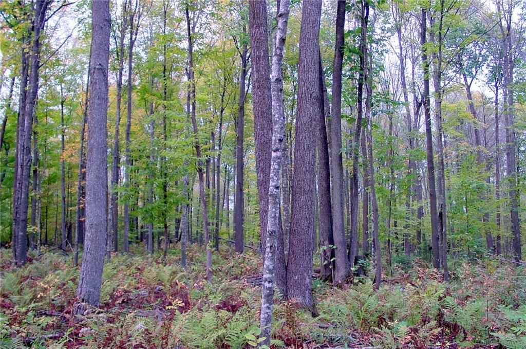 80 acres on Cty. Rd. P, Tony, WI 54563 - Tony, WI real estate listing