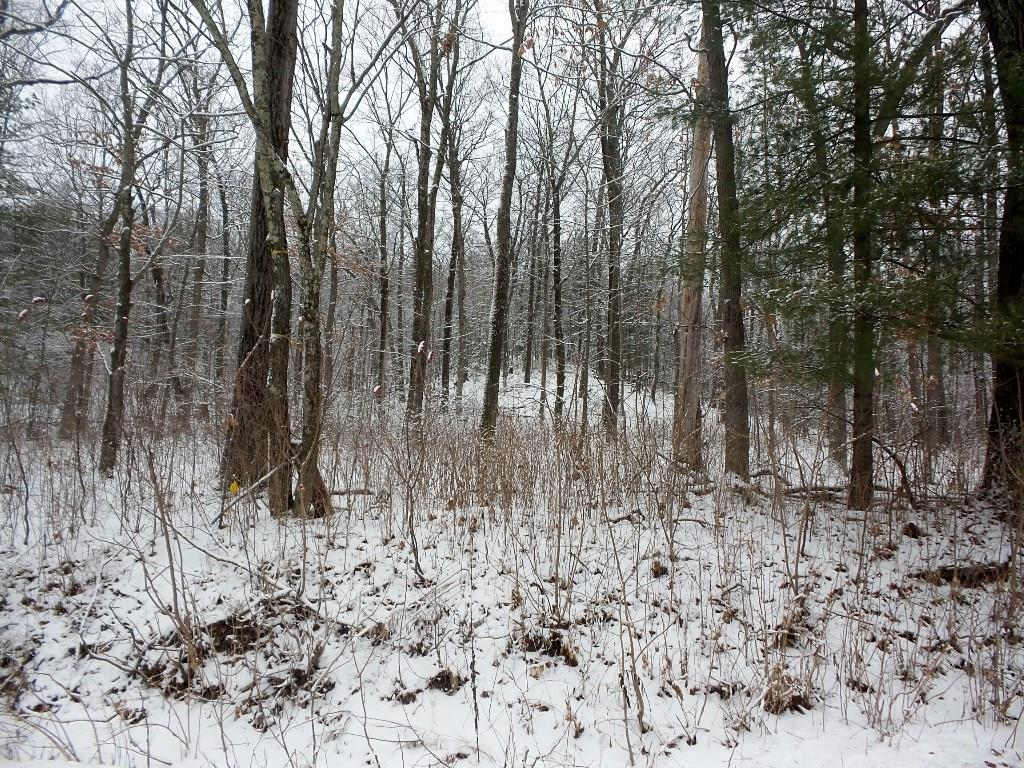 Lot 2, 7 Acres Blueberry Road, Warrens, WI 54666 - Warrens, WI real estate listing