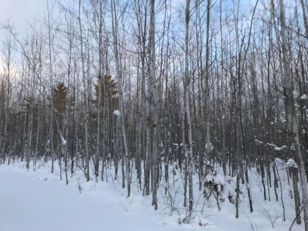 Near Lenawee Road, Herbster, WI 54844 - Herbster, WI real estate listing