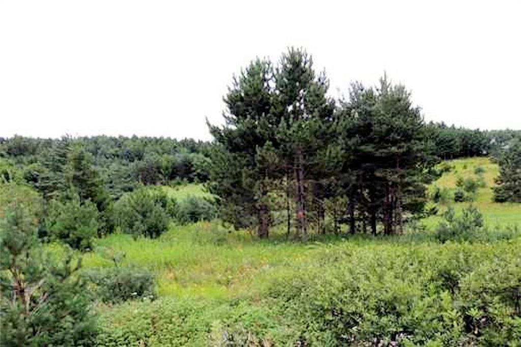 0 County Highway M Property Photo - Cable, WI real estate listing