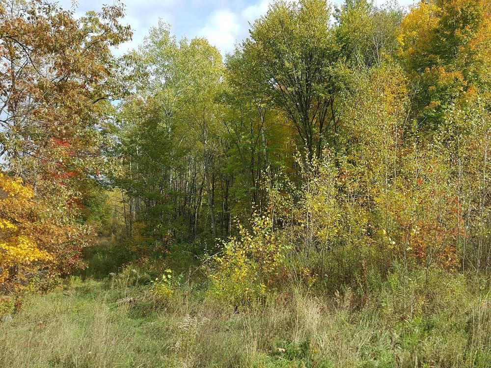 Off Hwy 53 8221 Property Photo