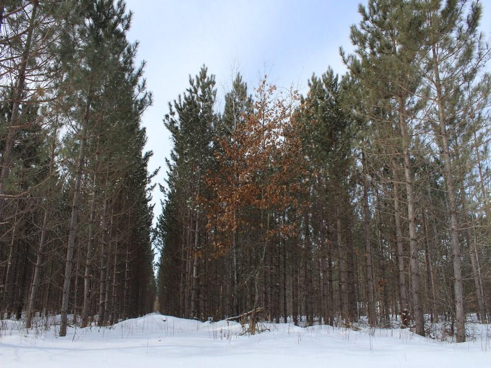 ON Whalen Lake 8223-4 Road Property Photo - Trego, WI real estate listing