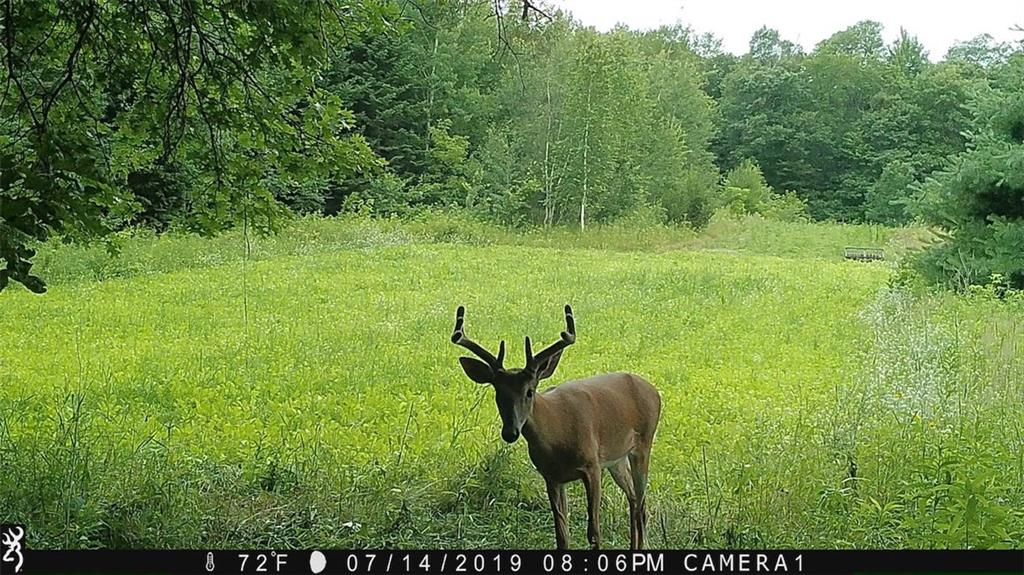 0 Highway 40, Elk Mound, WI 54739 - Elk Mound, WI real estate listing