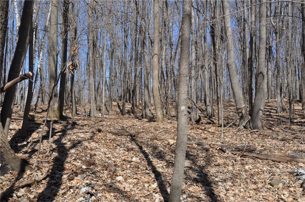 0 Duck Pond Road Property Photo - Sarona, WI real estate listing