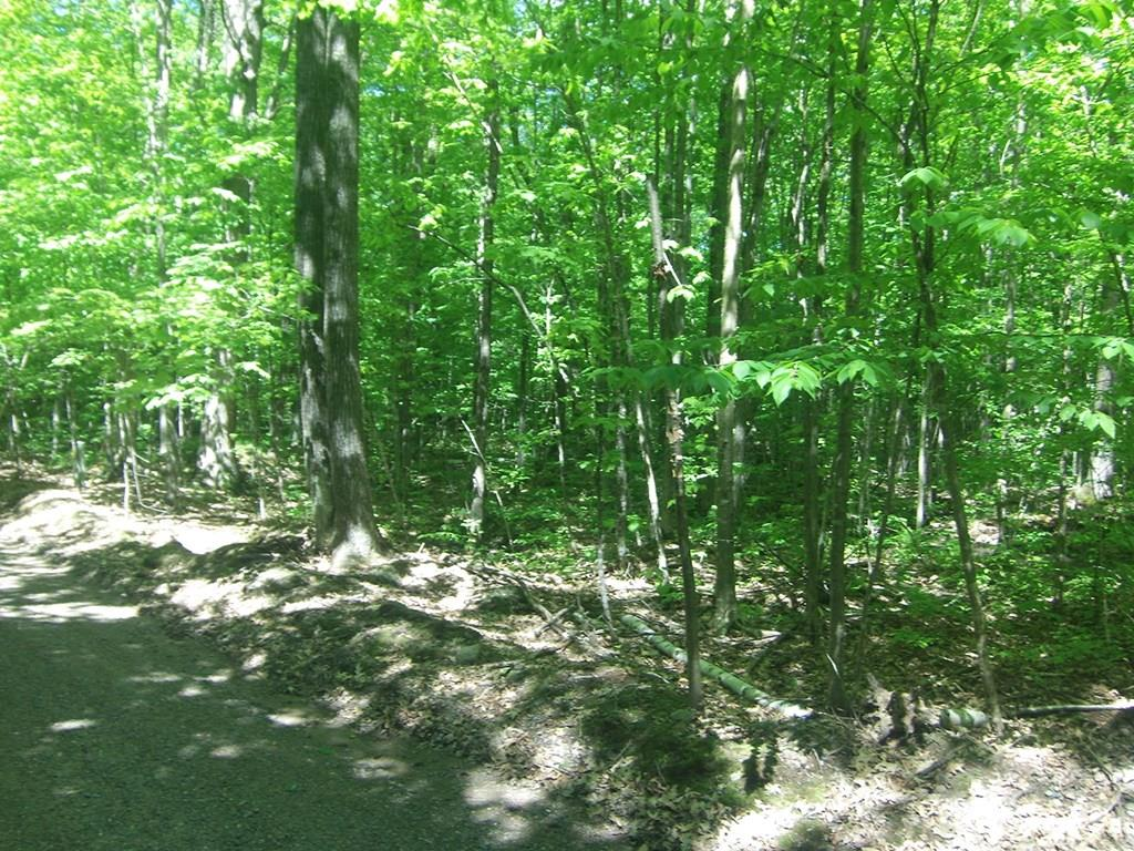 4.85 Acres Joes Road Property Photo - Conrath, WI real estate listing