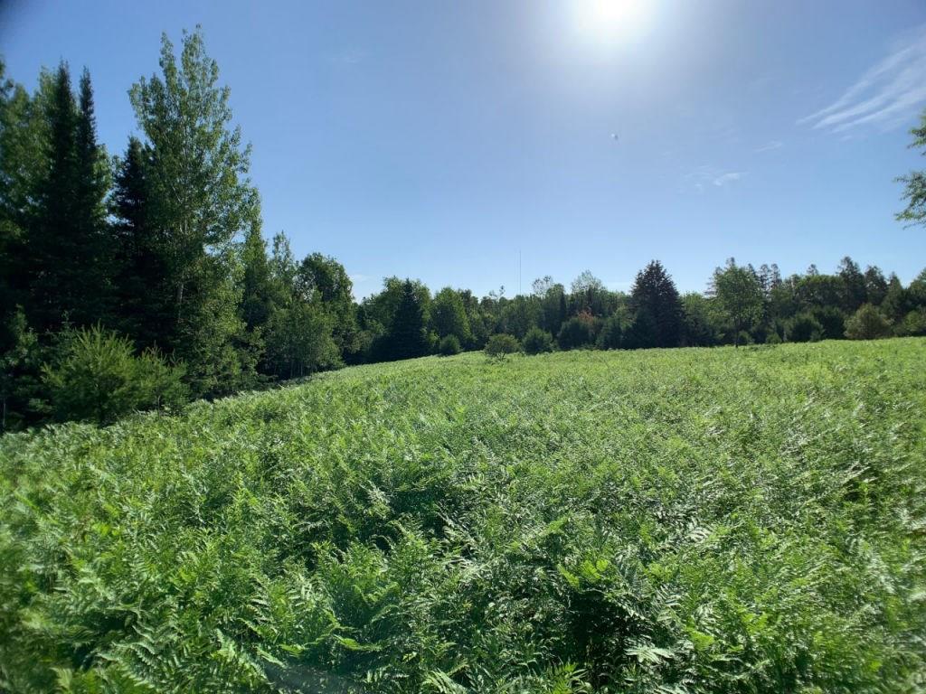 Lot 2 Bear Paw Trail Property Photo - Park Falls, WI real estate listing