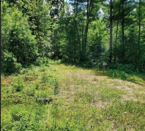 Lot 14 Halls Creek Estates Property Photo - Merrillan, WI real estate listing