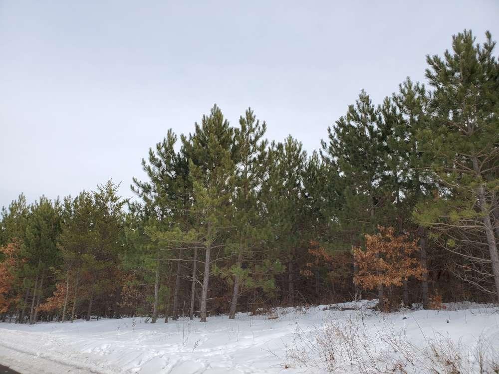 On Larson 8215-3 Road Property Photo
