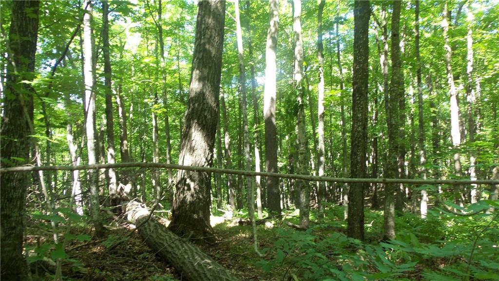 30.94 AC CHIPPEWA TRAIL Property Photo - Luck, WI real estate listing