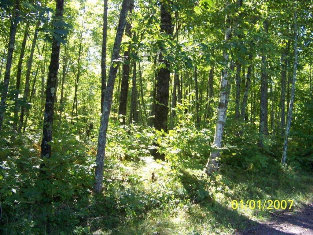 0 Haddick Road Property Photo - Springbrook, WI real estate listing