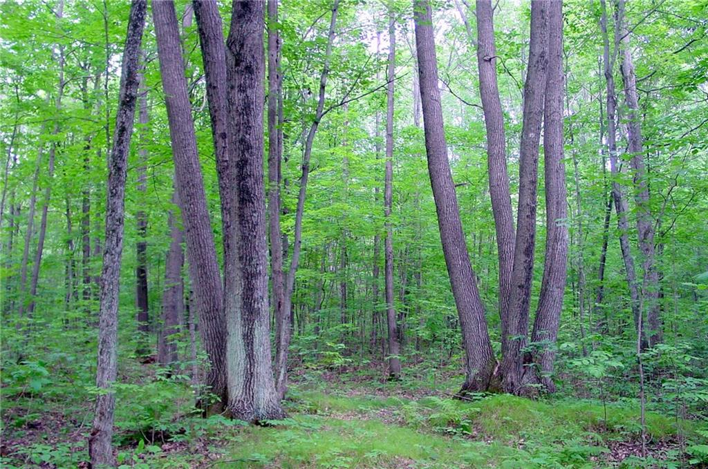 Lot 7 on Mae West Road Property Photo - Tony, WI real estate listing