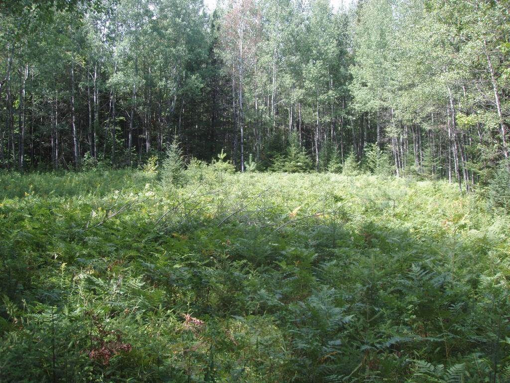 On Simon Rd Property Photo - Fifield, WI real estate listing