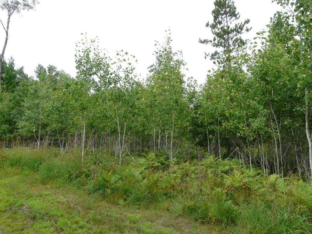 Lot 43 Treasure Island Drive Property Photo - Danbury, WI real estate listing