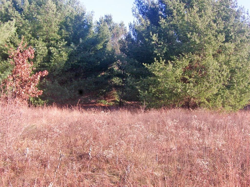 Lot 25 67th Avenue Property Photo - Cadott, WI real estate listing