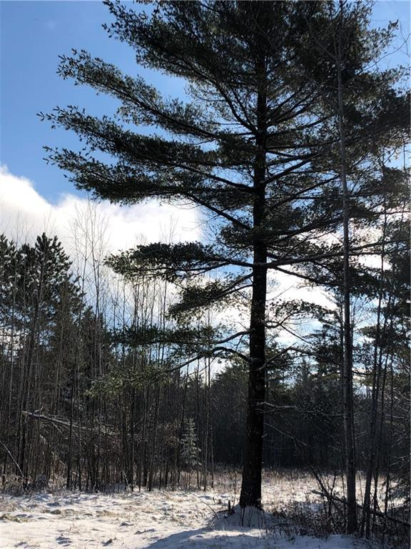 Forest Edge Real Estate Listings Main Image