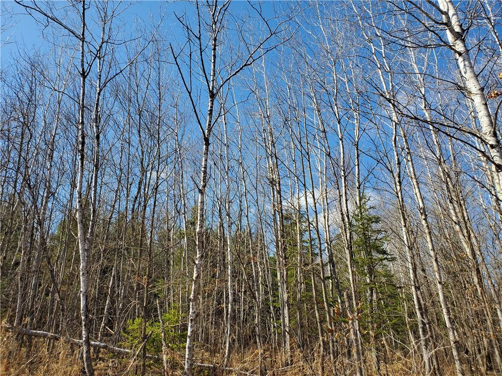 Near Bass Lake Road Property Photo - Park Falls, WI real estate listing