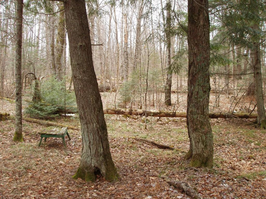 On Lofdahl Road Property Photo - Fifield, WI real estate listing
