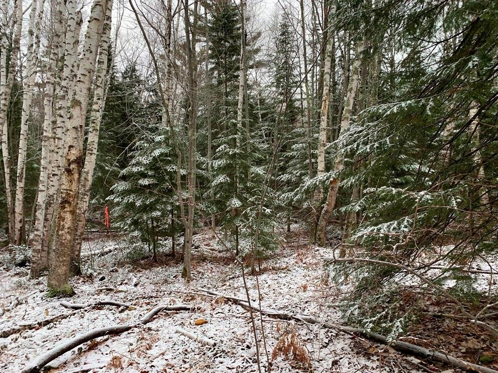 Lot 1 Blue Wing Bay Road Property Photo - Bayfield, WI real estate listing