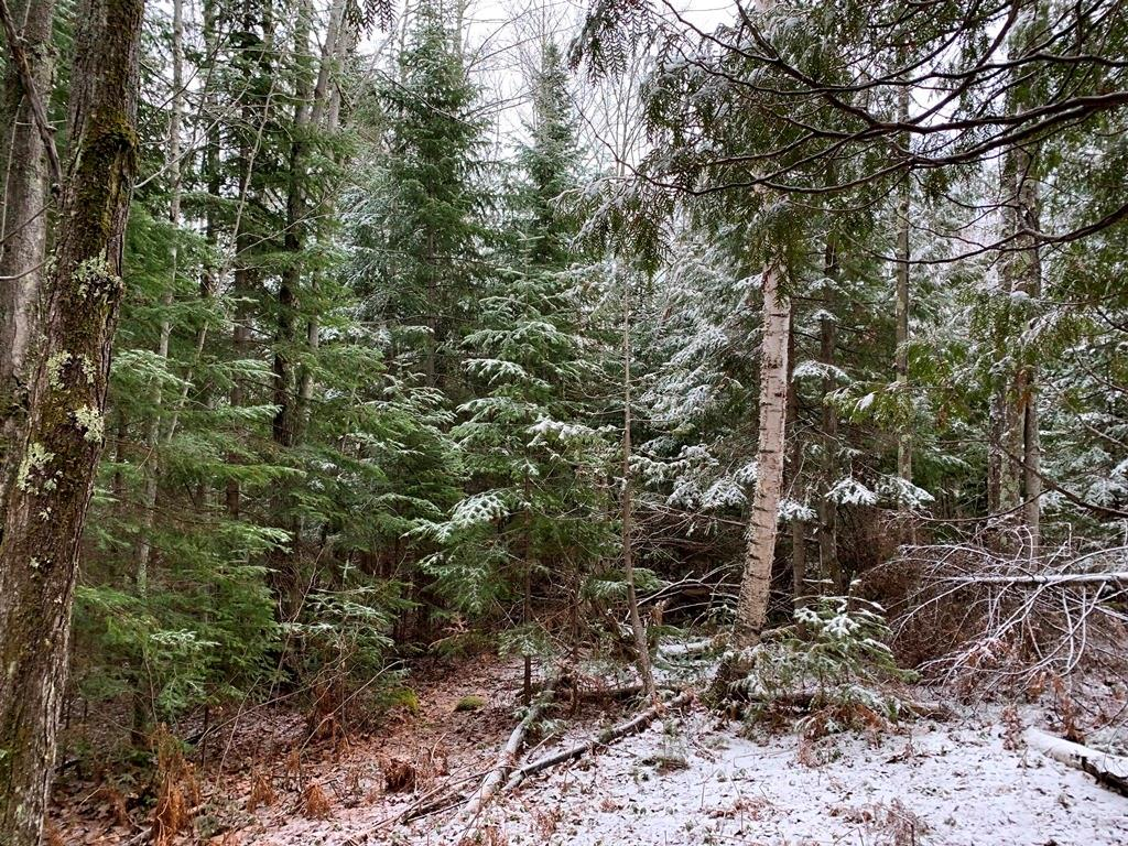Lot 3 Blue Wing Bay Road Property Photo - Bayfield, WI real estate listing