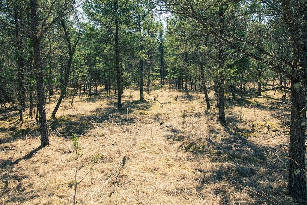 0 Pine Cone Drive Property Photo