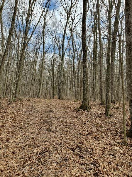 38.2 acres County Highway Y Property Photo 1