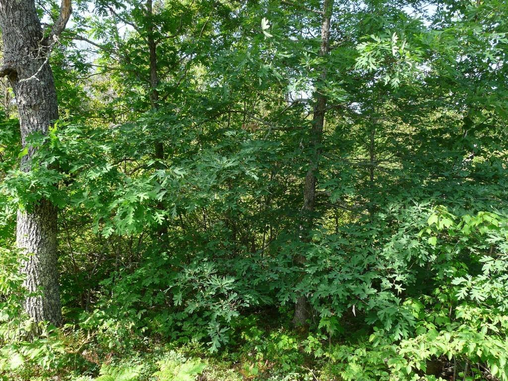 Deer Path Real Estate Listings Main Image