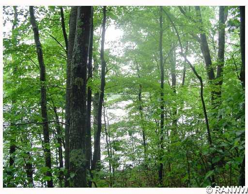 Lot 1 Hwy H, Iron River, WI 54847 - Iron River, WI real estate listing