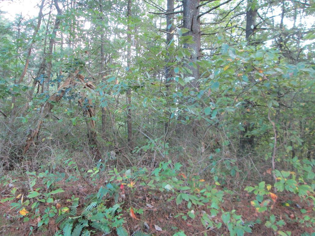 Tbd Ben Ridge Rd Property Photo