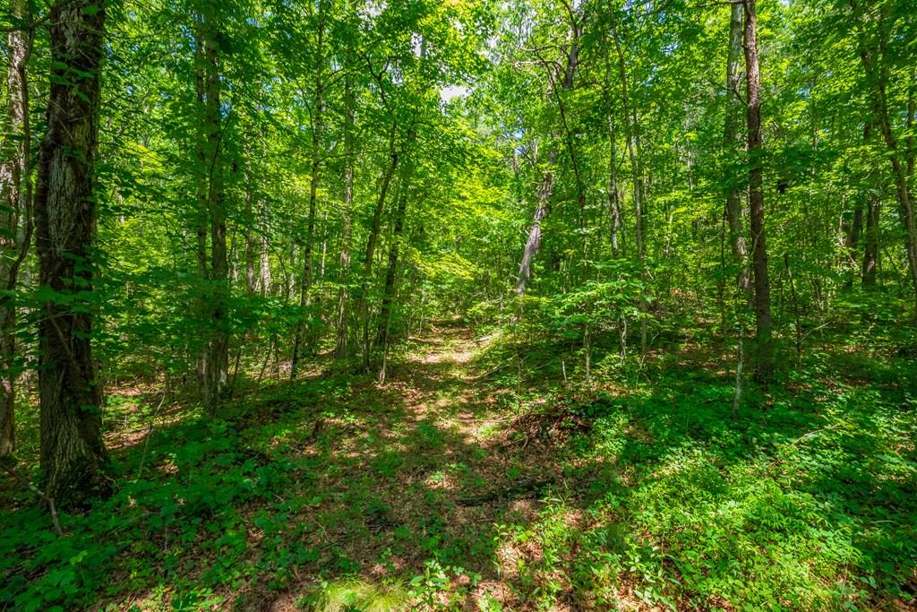 218 Acre Dinky Track Road Property Photo
