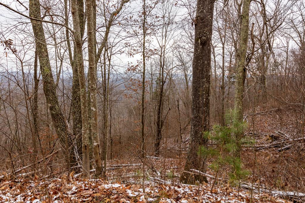 23.53 Ac North Fork River Rd Property Photo