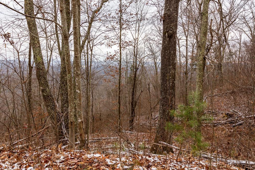 19.02 Ac North Fork River Rd Property Photo