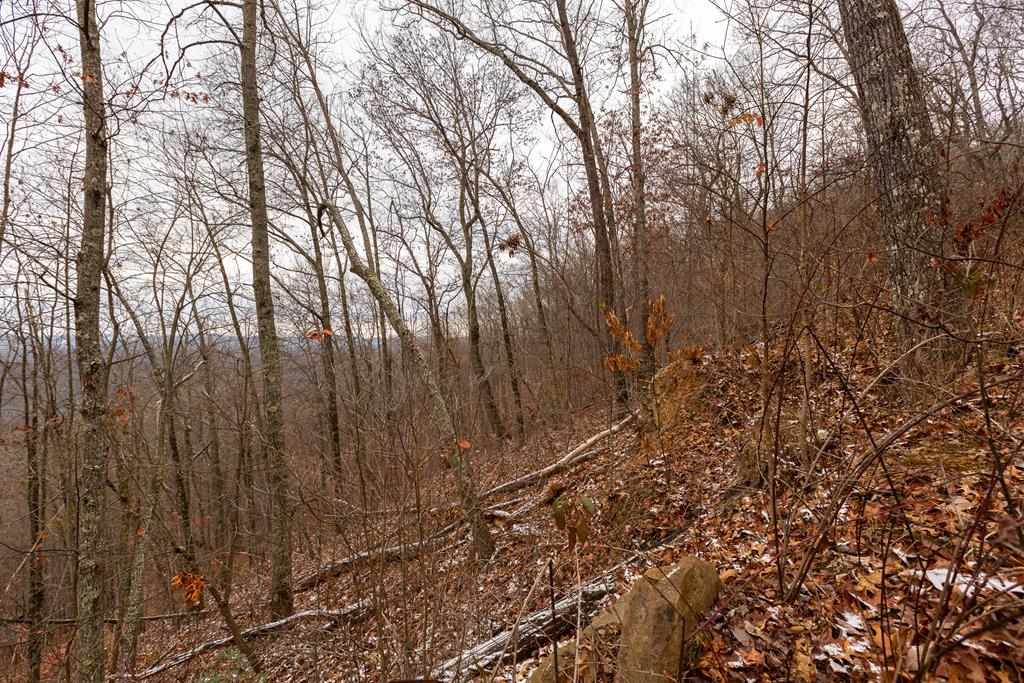 18.72 Ac North Fork River Rd Property Photo