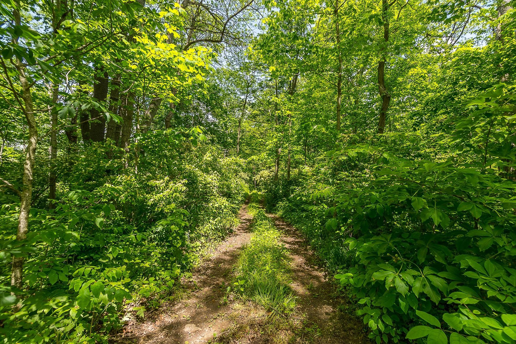 4258 Iddings Road Property Photo 64